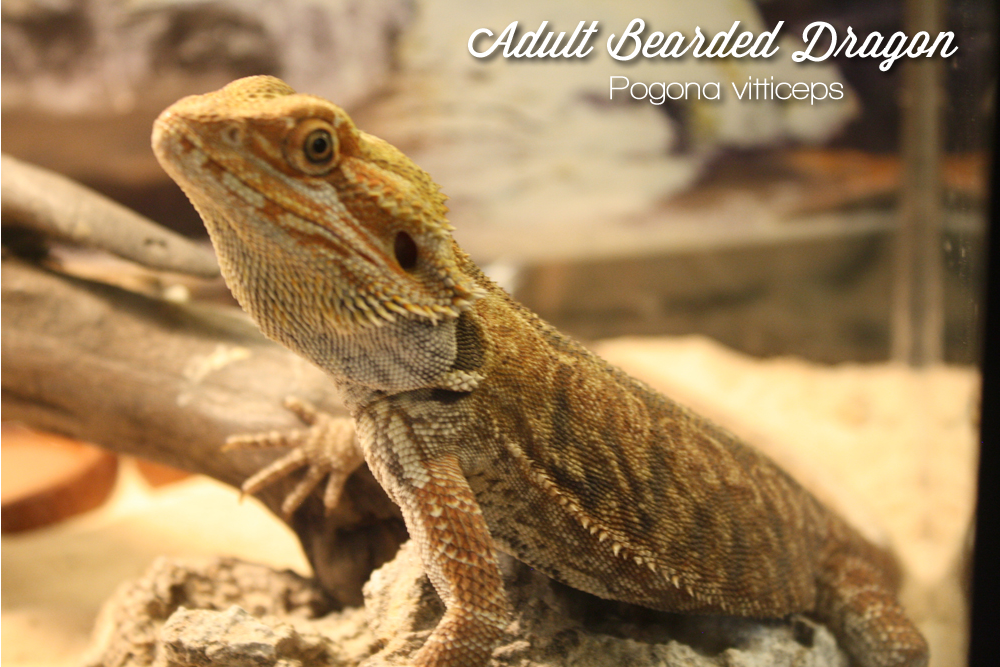 Lizards – Fins and Skins