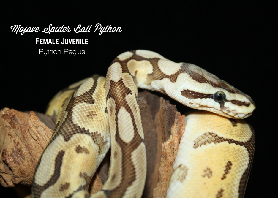 Snakes – Fins and Skins
